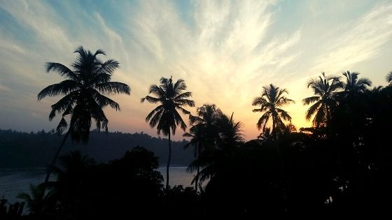 palm-trees-sunset-beach-holiday