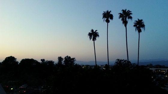 la-palm-trees-at-night-skyline